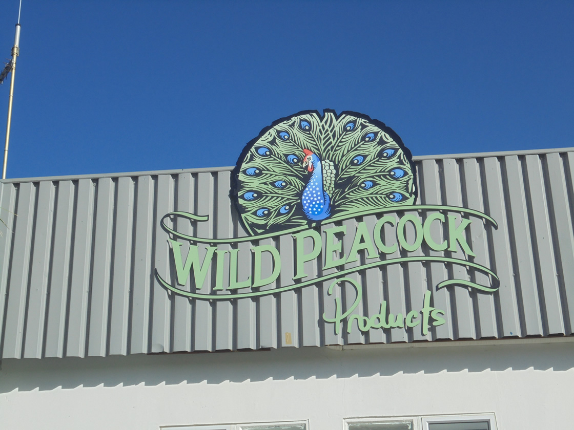 This picture is a graphic logo, designed by the professional graphics company Vye Graphics, for the company Wild Peacock.